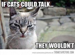 913789cfb11308de022678fa983056eb--funny-cat-memes-funny-cats