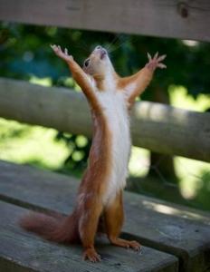 drama-queen-squirrel-8854