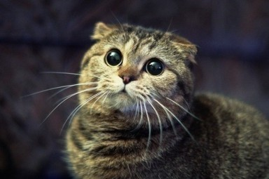 Funny-Cats-Big-Eyed-Cat.jpg