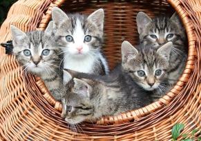 cat-1209743_640